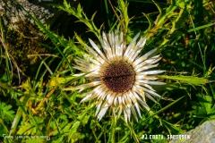 prayonlafouly_170923_-(32)