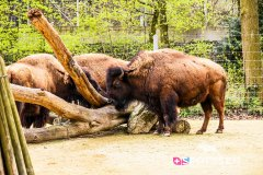 zoo_bale_210406_-10