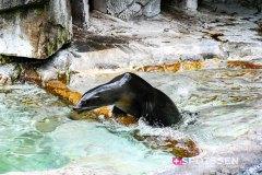 zoo_bale_210406_-12