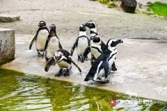 zoo_bale_210406_-13