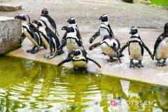 zoo_bale_210406_-14