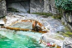 zoo_bale_210406_-16