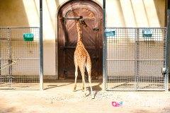zoo_bale_210406_-17