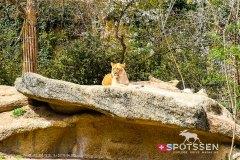 zoo_bale_210406_-19
