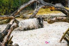 zoo_bale_210406_-2