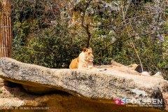 zoo_bale_210406_-20
