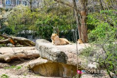 zoo_bale_210406_-22