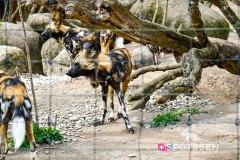 zoo_bale_210406_-24