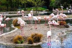 zoo_bale_210406_-26
