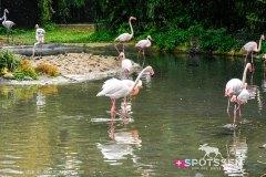 zoo_bale_210406_-27