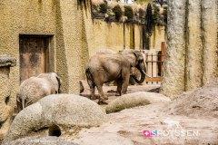 zoo_bale_210406_-28