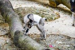 zoo_bale_210406_-3