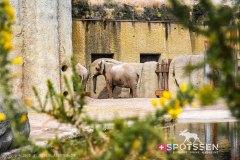 zoo_bale_210406_-30