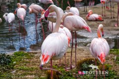 zoo_bale_210406_-32