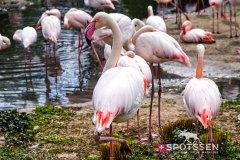 zoo_bale_210406_-33
