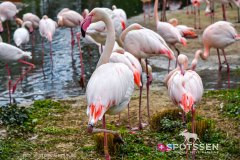 zoo_bale_210406_-34