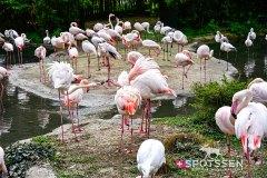 zoo_bale_210406_-35