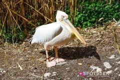 zoo_bale_210406_-37