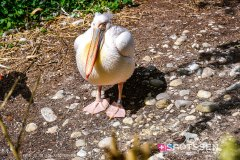 zoo_bale_210406_-38