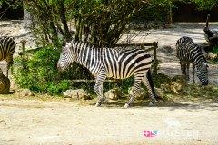 zoo_bale_210406_-40