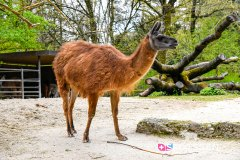 zoo_bale_210406_-6