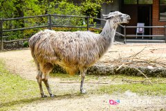 zoo_bale_210406_-8