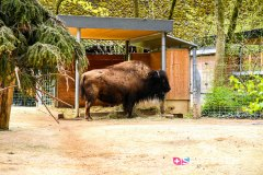 zoo_bale_210406_-9