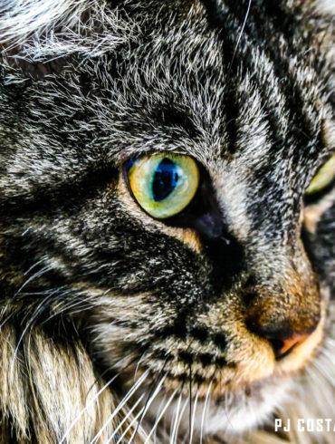 animaux, chats, portraits, lisa
