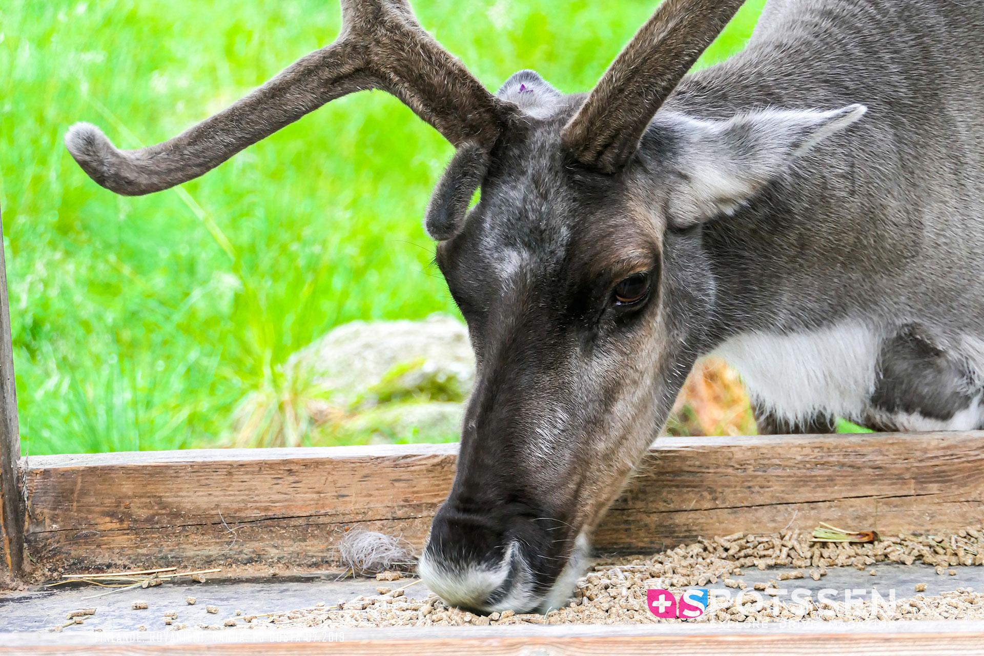 2019, rovaniemi, ranua, zoo, finlande