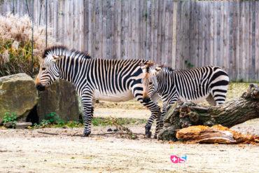 2019, zoo, anvers, belgique
